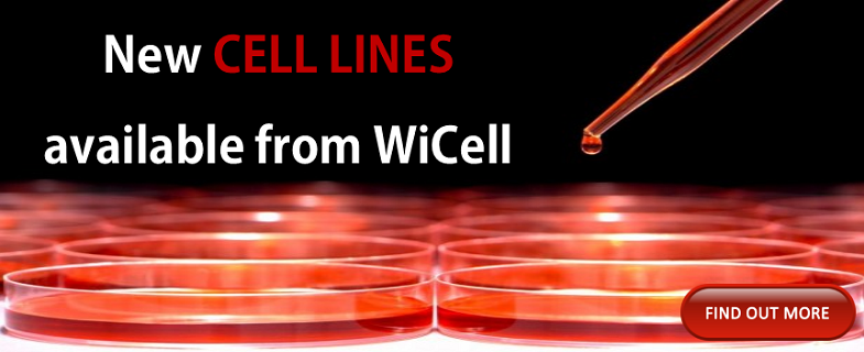New Cell Lines Available from WiCell